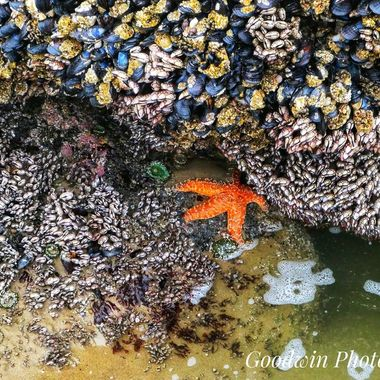 Sea Creatures Waiting For the Tide