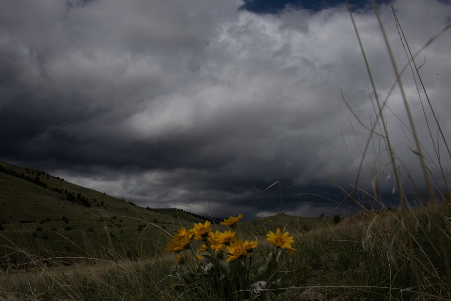 The first expedition in to the hills this spring and the spring rain rose up again. Sunflowers ar...