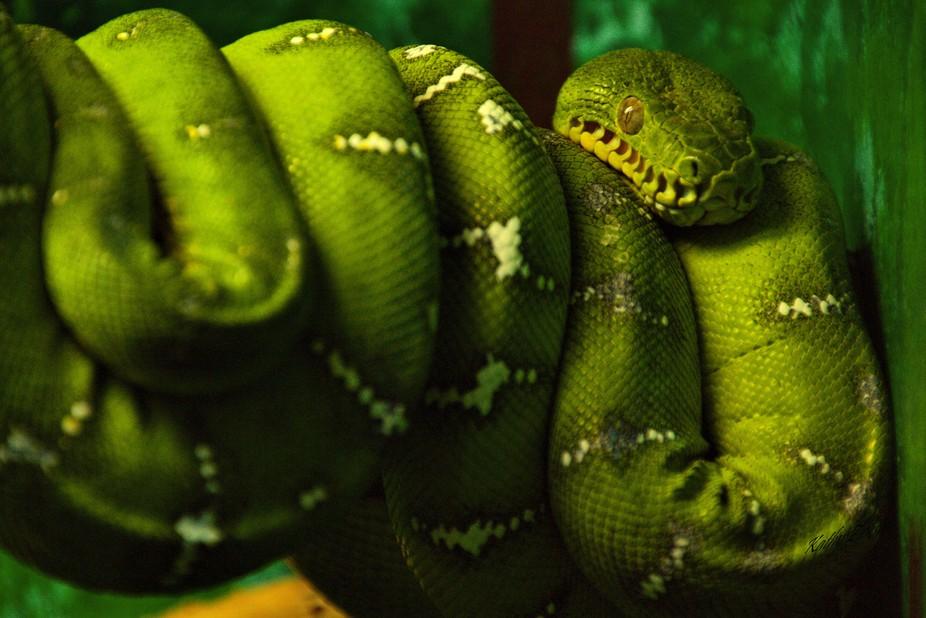 Emerald Python
