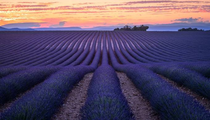Lavender Field. by LukasPetereit - A Purple World Photo Contest