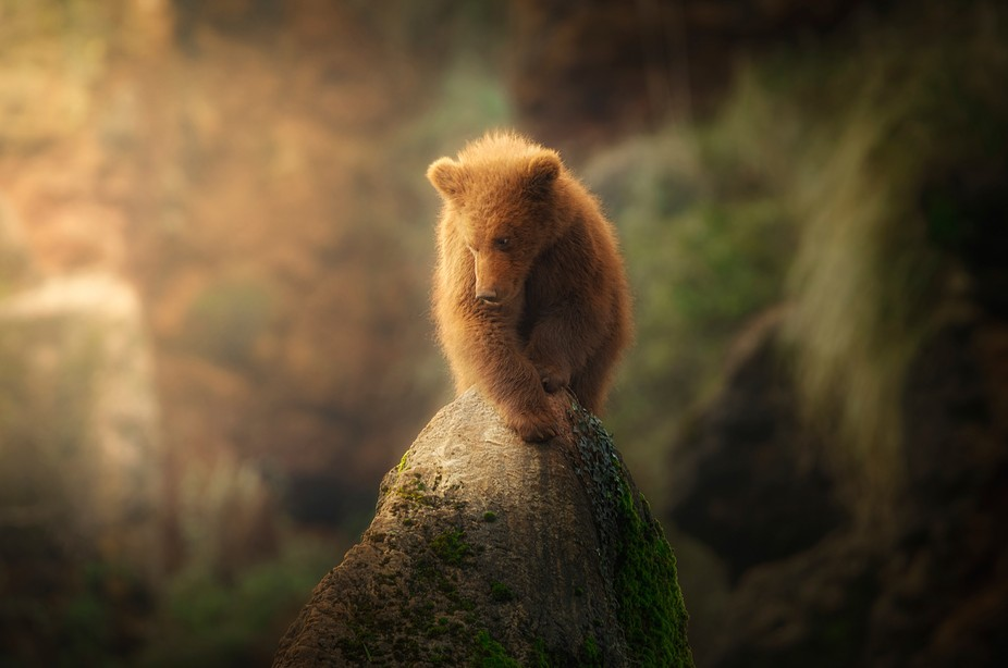 An special moment of light, with a cub in the mountain.