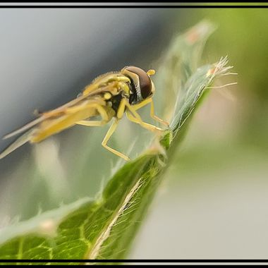 Wasp in my back yard