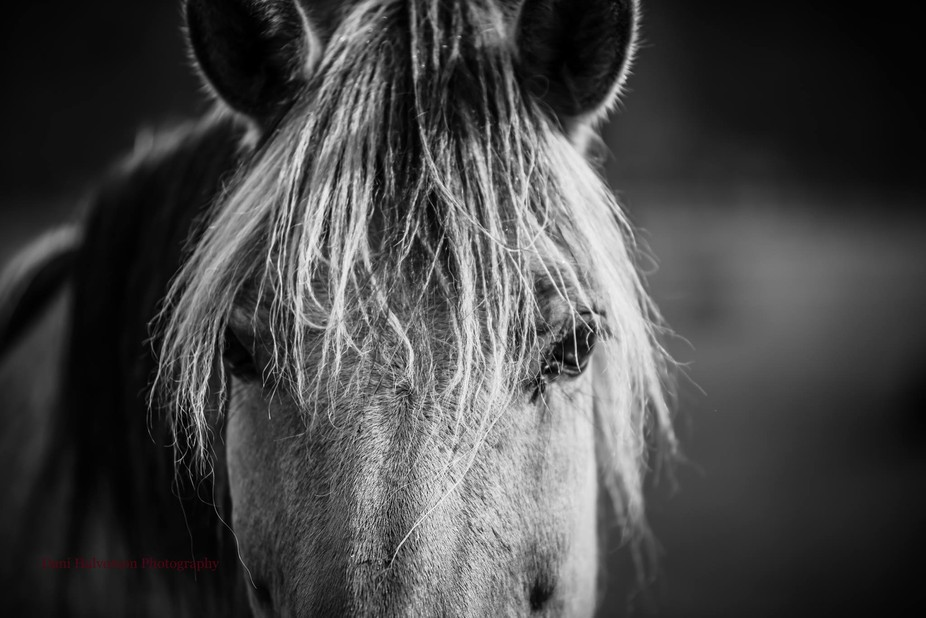 this beautiful animal was in a pasture in the mountains of BC, Canada. Rugged, dirty, in-groomed,...