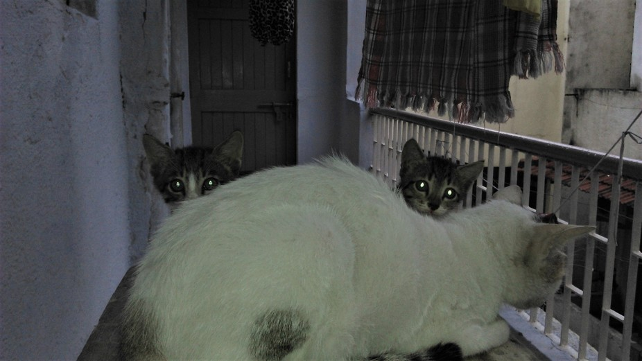 Kittens and Cat in picture during night and their eyes adds story and life in picture, they are c...