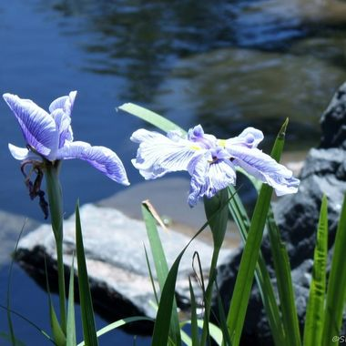 Iris DBG v1