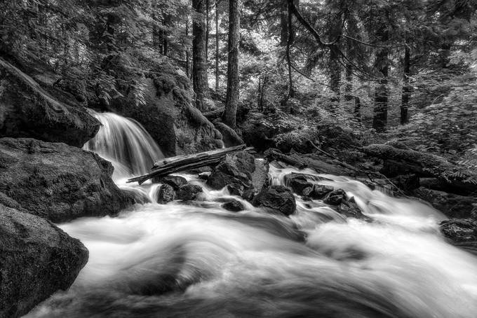 The Forest and the Creek - BW Version by smunited - Our World In Black And White Photo Contest