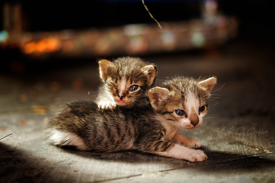 Found these kittens in this position on one of the alleys in the Souq (market), probably waiting ...