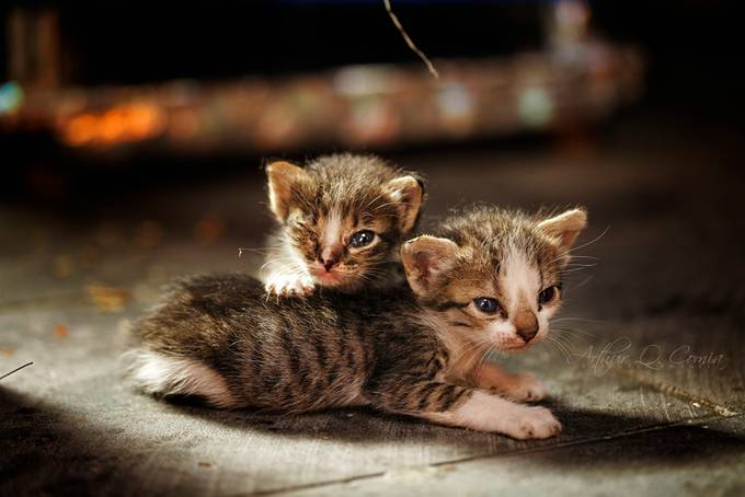 As Long as We Have Each Other by arthurcomia - Kittens vs Puppies Photo Contest