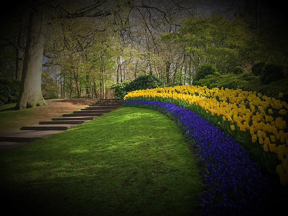 keukenhif Gardens, Holland