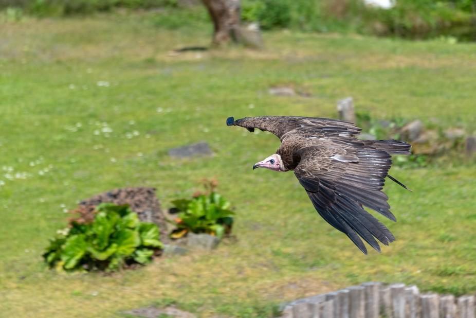 Bird panning