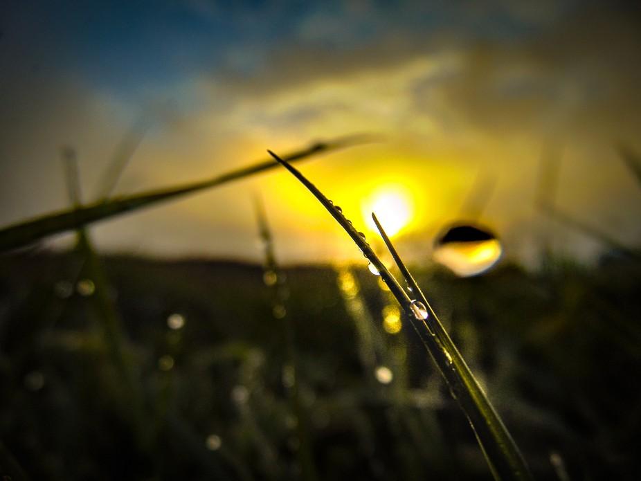 Droplets at Dawn