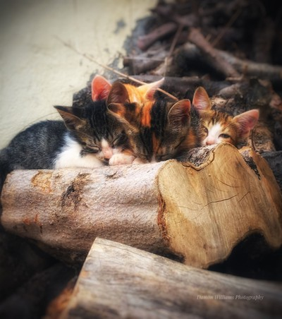 Four kittens sleeping on a log shot taken in Gouves Crete