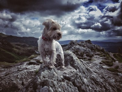 One super dramatic puppy