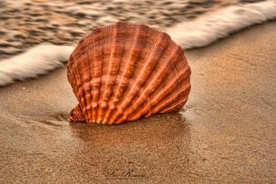 Treasures At The Beach . . .