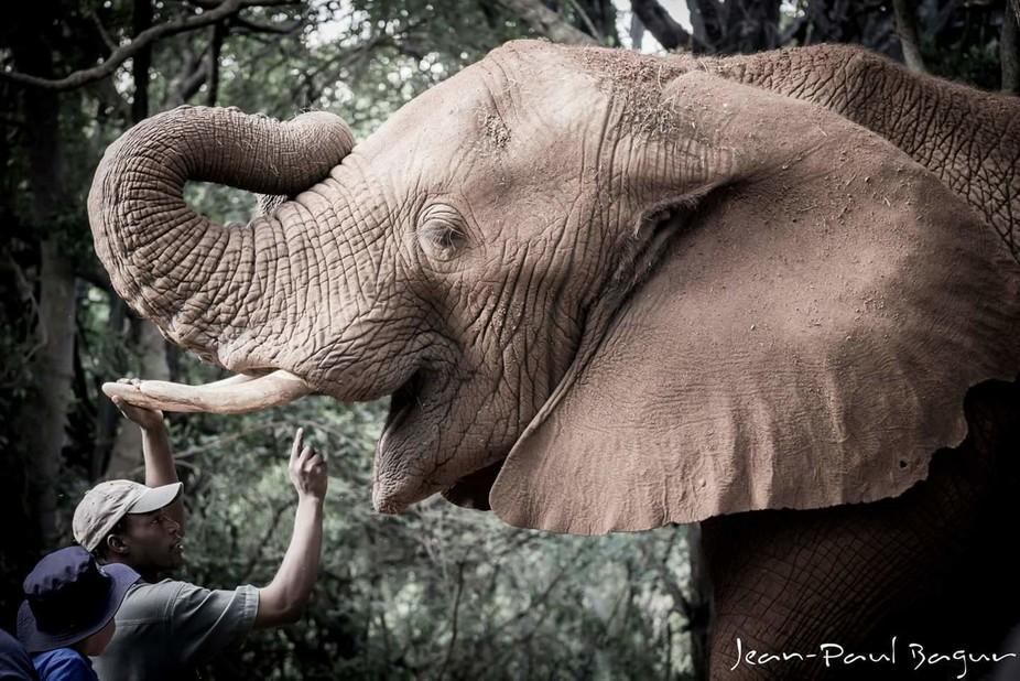 Man Feeding Elephant