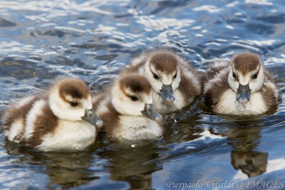 New Born in Hyde Park