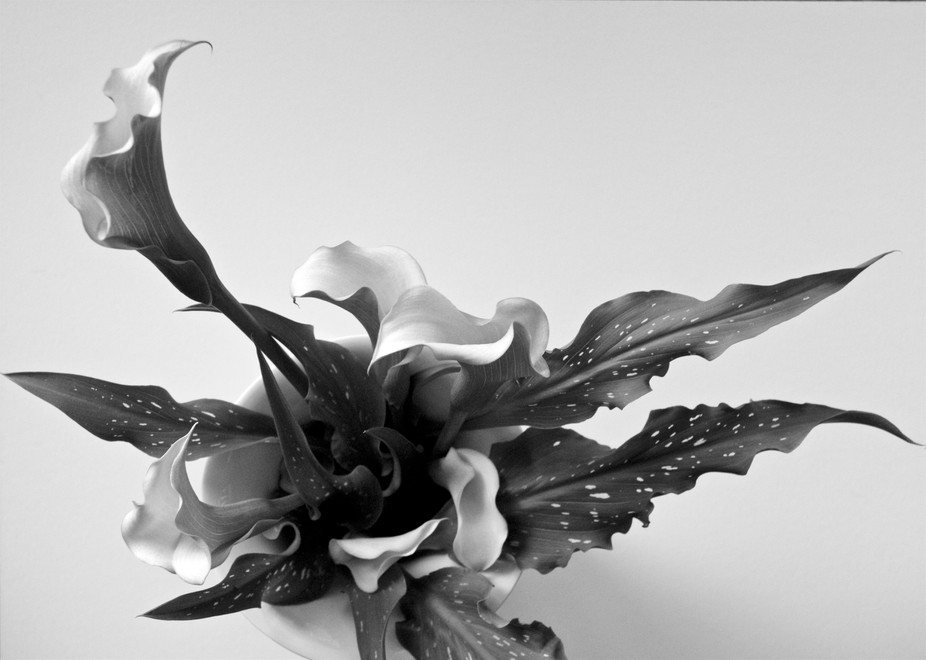 Miniature Calla Lilies in a Vase.