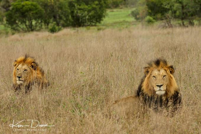 Private Reserve, Londolozi South Africa by kimdavis_8187 - Monthly Pro Photo Contest Vol 44