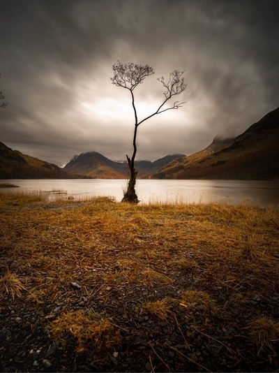 Buttermere Lone Tree Is A Beauty