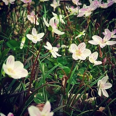 Be honest, be nice, be a flower not a weed.  #flowers #spring #instagood #mypic #plantsofinstagram #behonest #flowerslovers #plantsomething #greenthumb #watchthemgrow #growsomethinggreen