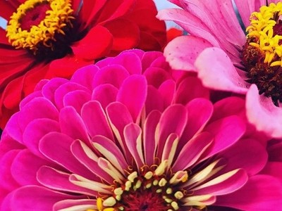 No rain..... No flowers.... #mypictures #flowers #beautiful #instnature #flowerporn #theymakemyheartsmile #fallflowers #localflowers #farmersmarket #????