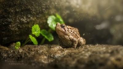 Toad, defensive posture.