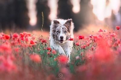 Ipnotic flower
