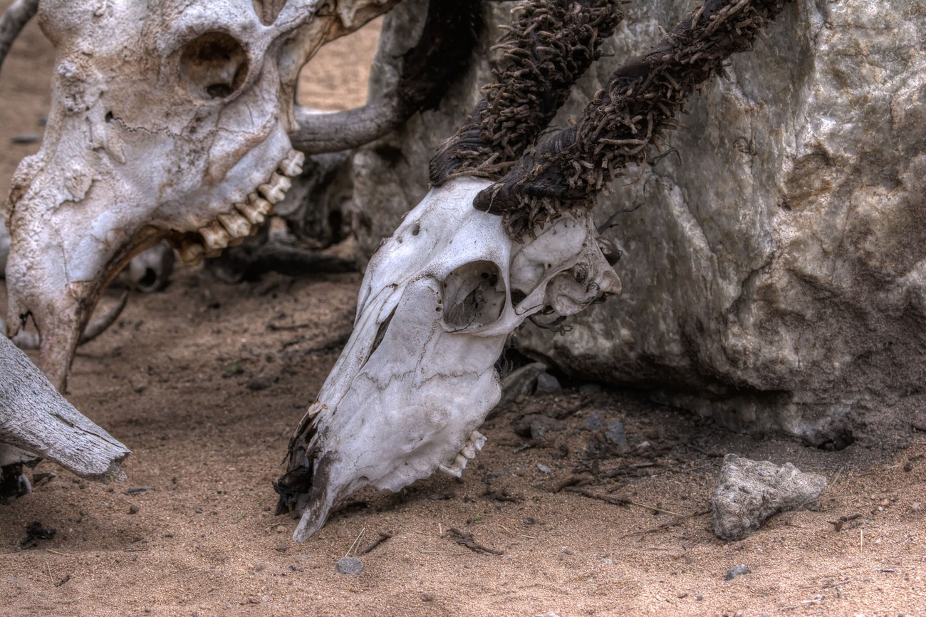On Death and Dying - Tarangire National Park, Tanzania Africa