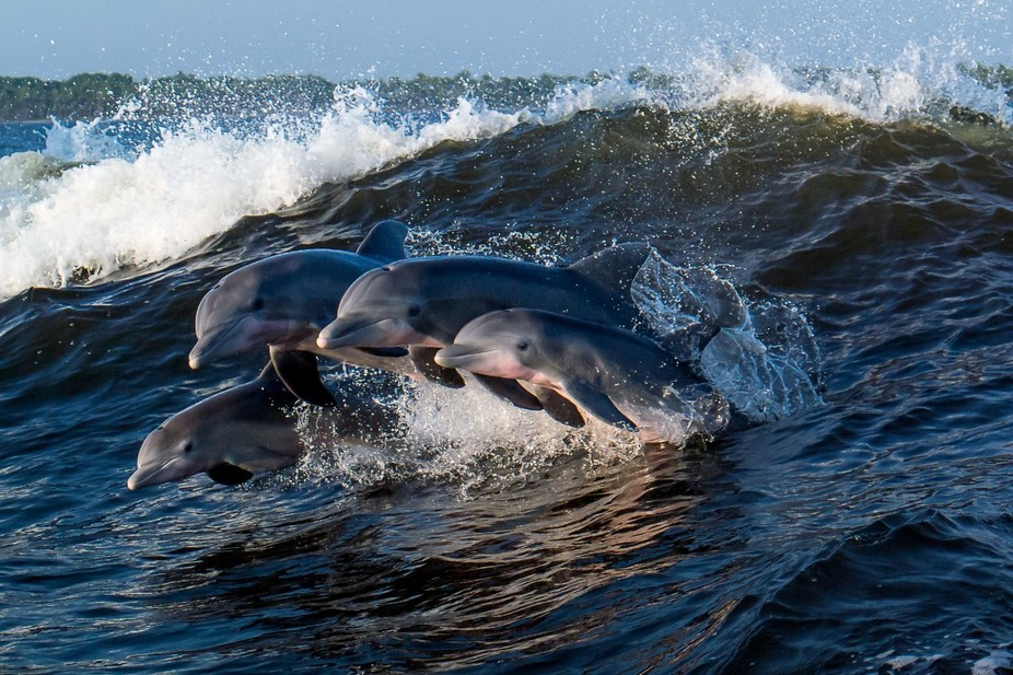We were on a Dolphin Cruise so of course I planned on capturing a few but was amazed that I was a...
