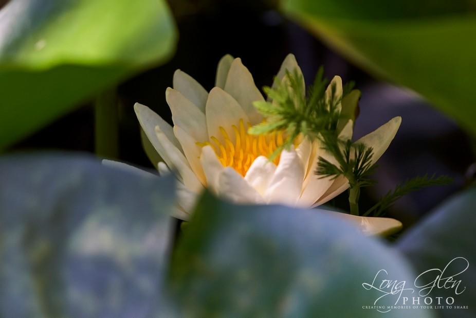 Shots from the garden