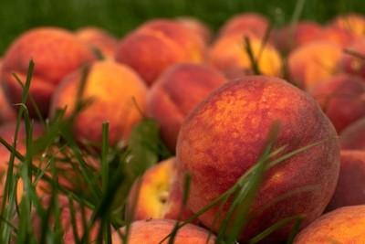peaches on green grass