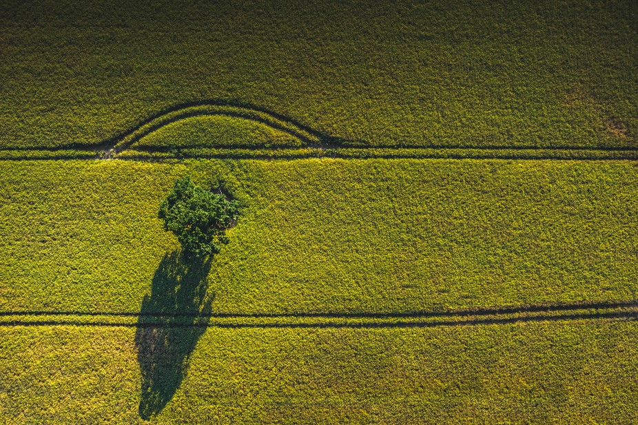 A tree casting shadow on a farm field, Takn with the brand new Typhoon H plus