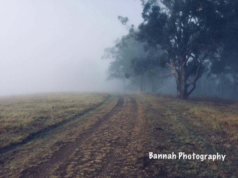 Cold winter morning, waiting for the fog to lift.