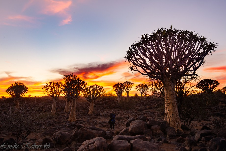 The Quiver Tree Forest at Sunset