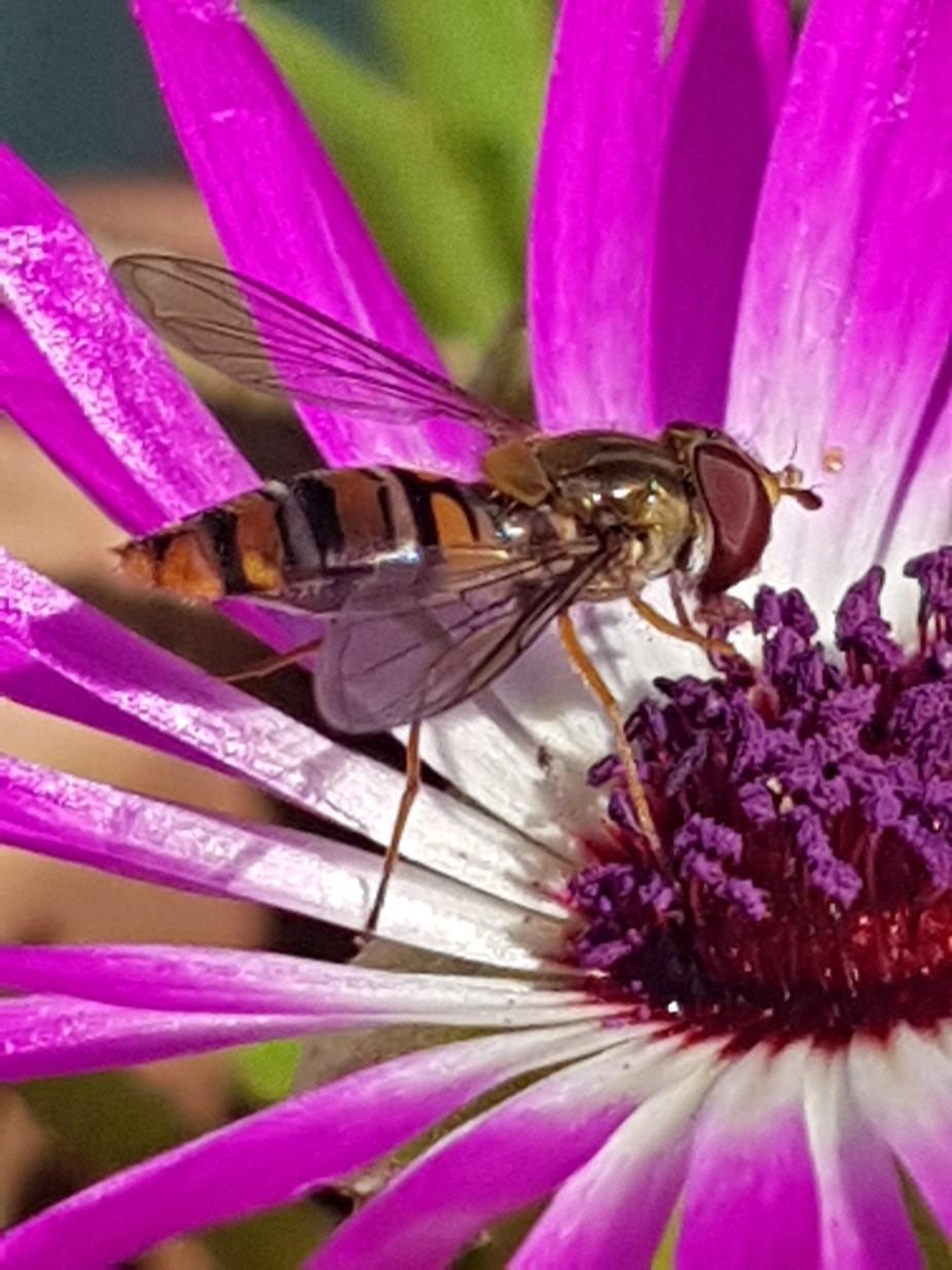 Nature nectar