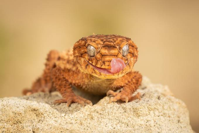 Smiley Friend by janstria - Reptiles Photo Contest