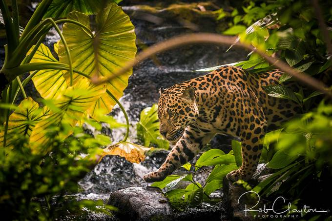IMG_8637 by RobClaysPhotos - Celebrating Earth Day Photo Contest 2019