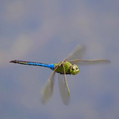 Float like a Dragonfly