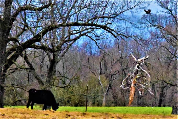 This tree grew strangely and was quite striking in this field.  I wanted this to be scary!