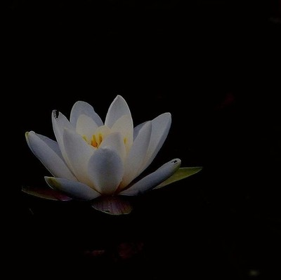 Took this years ago in South Uist #lillies #lilliepond #visualsofscotland #highlandsandislands #outerhebrides #holidayfun #holidaysnaps #flowers #bridgecameraphotography #lumix #panasoniclumix