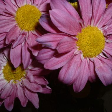 Flowers-A-150