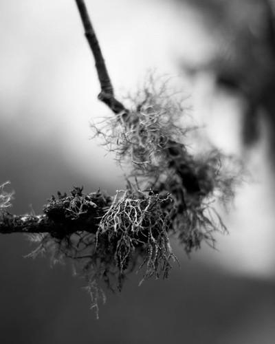 Hope you 'lichen' this shot