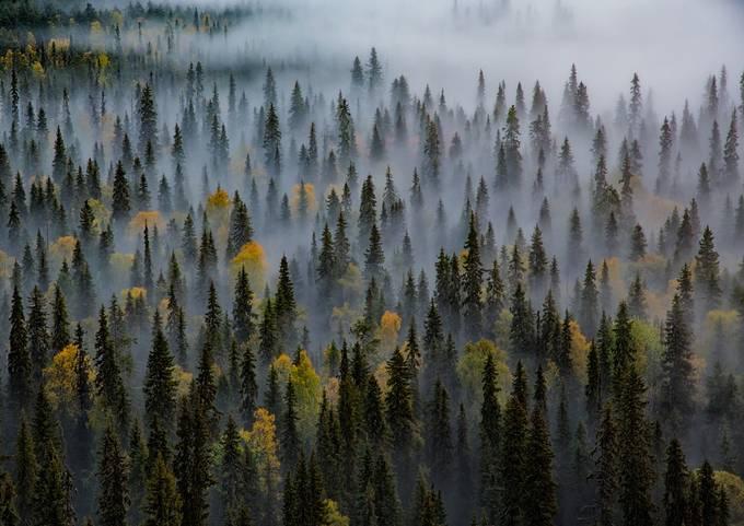 Autumn_forest by haksu - Silent Fog Photo Contest