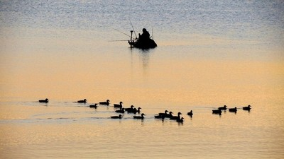 Silhouettes Esrum lake.