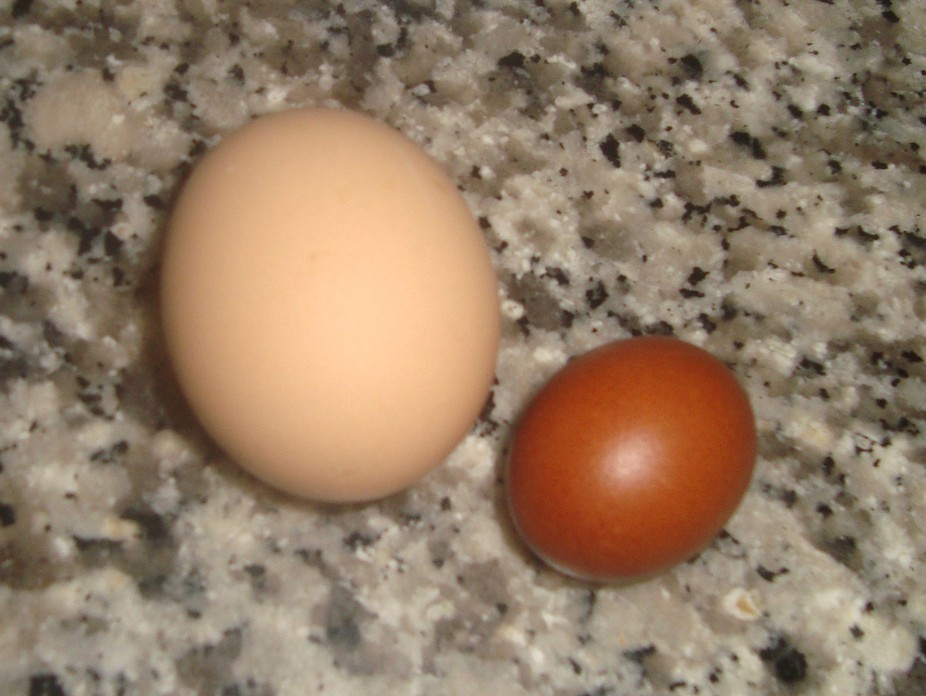 Out of 50 chickens, one particular chicken is very small and lays very small eggs. It is said she...