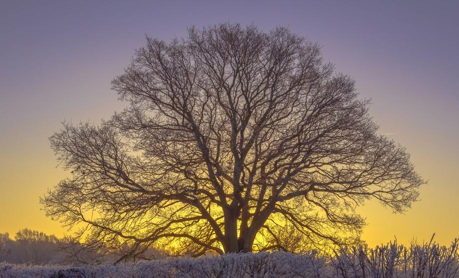 Majestic Dawn