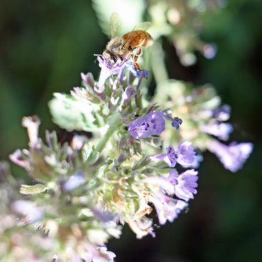 BEE 29