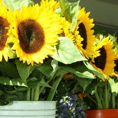 MARKET FLOWERS 011