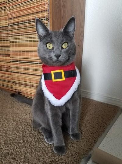 Christmas Meeko