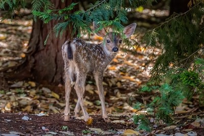 Newborn Fawn - A Look Back